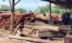 Tàng trữ hơn 2.000 hộp gỗ lậu, chủ doanh nghiệp bị khởi tố