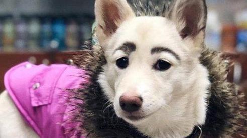 Tưởng rằng ai đó đã makeup cho chú chó tội nghiệp, ai ngờ đâu người bạn 4 chân lại sở hữu bộ lông mày lá liễu vô cùng kỳ lạ