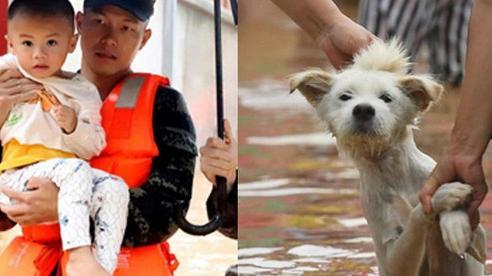 Trẻ em được giải cứu; riêng chó, mèo, lợn, gà, động vật hoang dã tự chạy trốn trong mưa lũ ở Trung Quốc