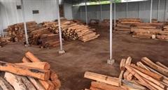 Khởi tố chủ doanh nghiệp mua bán, tàng trữ 193m³ gỗ trái phép
