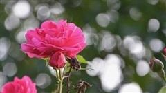 Tử vi tuần mới 27/7 - 2/8: Tuổi Sửu sự nghiệp hanh thông, tuổi Mùi quý nhân trợ giúp