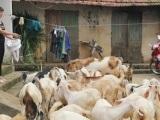 Giải pháp phát triển gắn với chuỗi liên kết tại huyện Thạch Thất