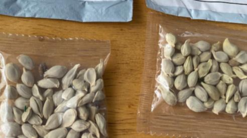 Hé lộ sự thật đằng sau hàng trăm bưu kiện hạt giống 'bí ẩn' từ Trung Quốc