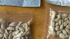 Trung Quốc gửi hạt giống bí ẩn đến nhiều nước để làm gì