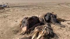 Bí ẩn sinh vật dài 4,5 mét nằm trên bờ biển Anh