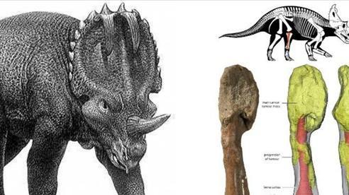 Khủng long cổ xưa mắc ung thư xương, thứ bệnh tưởng chỉ có ở con người