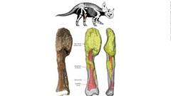 Khủng long có thể mắc ung thư xương