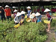 Phú Quốc phát triển mô hình nông nghiệp sinh thái gắn với du lịch
