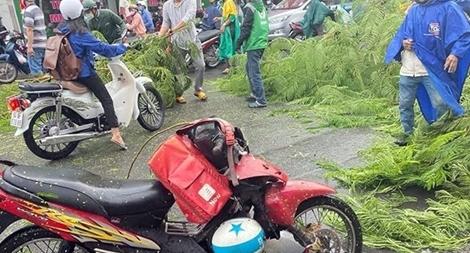 Cây phượng bật gốc đổ vào dòng phương tiện trong cơn mưa