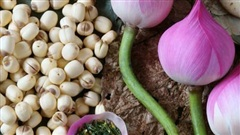 Lợi ích tuyệt vời của hạt sen đối với sức khỏe là đa vi chất, ví như thực phẩm chức năng