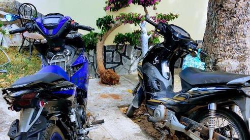 Cậu cháu rủ nhau trộm cây cảnh trên đường phố Phan Thiết
