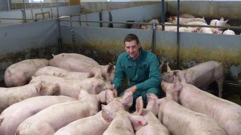 Thịt lợn từ Đức bị Trung-Nhật-Hàn 'quay lưng': Không tránh được vỏ dưa, gặp cả vỏ dừa