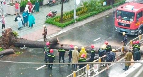 Trách nhiệm thuộc về ai khi cây đổ làm chết người?