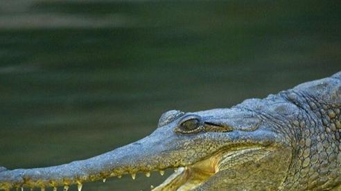 Bị cá sấu cắn trúng đầu, người đàn ông may mắn sống sót