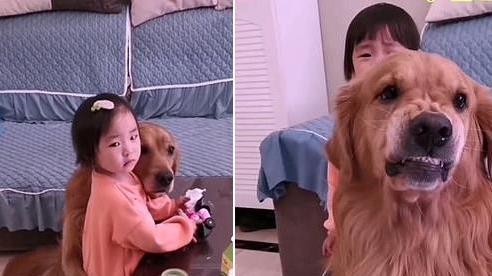 Thấy cô chủ nhỏ bị mắng, chú chó liền chạy lại ôm ấp, vỗ về