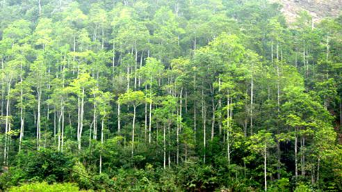 Phục hồi rừng để chống lũ lụt