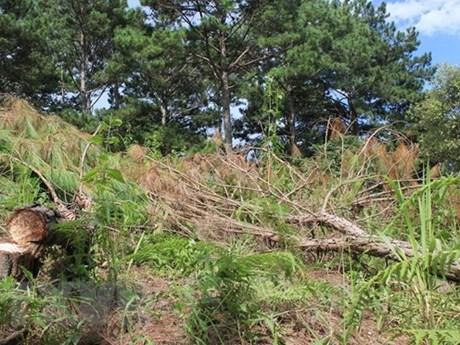 Cưỡng chế, thu hồi 3.600m2 đất rừng bị lấn chiếm tại Đà Lạt