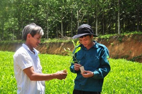 Quảng Nam: Hợp tác xã có quy mô lớn, bền vững góp phần thay đổi diện mạo nông thôn thời kỳ hội nhập