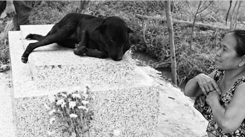 Chuyện ly kỳ về chú chó 3 năm nằm canh mộ em bé 2 tuổi khiến chủ nhân rơi nước mắt