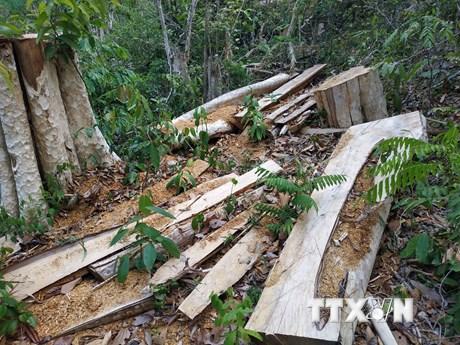 Đắk Lắk: Bắt tạm giam nguyên giám đốc công ty lâm nghiệp để mất rừng