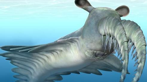 30 con mắt trong đá hé lộ 'quái vật' khủng khiếp 500 triệu tuổi