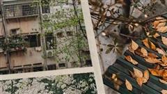 Hà Nội tháng 3 vẫn đẹp đến nao lòng dù đang giữa mùa dịch: ngắm ảnh lộc vừng thay lá, sữa nở, bàng đâm chồi mà thấy sao an yên