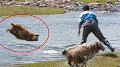 'Sen' mà áp dụng cách tắm cừu của dân du mục thì 'boss' chỉ có nước khóc hết nước mắt