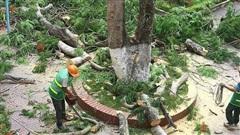 Không có chuyện 'tàn sát' phượng ở thành phố hoa phượng đỏ Hải Phòng sau vụ cây đổ làm chết học sinh tại TP.HCM