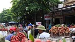 Người dân Bắc Giang tấp nập đi bán vải thiều chín mọng: 'Chăm sóc cả năm chỉ chờ ngày này'