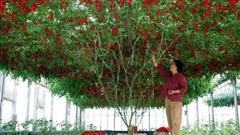 Choáng váng với những gốc cây 'mắn đẻ' nhất hành tinh, trong đó có một cây ở Việt Nam