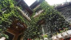 Ngôi biệt thự quanh năm phủ kín cây xanh, vào nhà mát rượi như lạc vào 'cõi tiên' ở Hà Nội