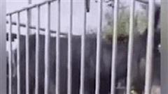 Sắp bị đưa vào lò mổ, con lừa thoát chết phút cuối sau khi rơi nước mắt và liên tục cúi lạy cầu cứu người đi đường