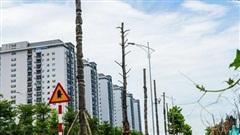 CLIP: Hàng loạt cây héo khô trên con đường 'ngàn tỉ' vừa đi vào sử dụng