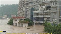 Ngập lụt nghiêm trọng ở Trung Quốc, cá thi nhau nhảy khỏi mặt nước hít oxy