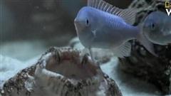 Màn ngụy trang săn mồi đỉnh cao của cá mập thảm
