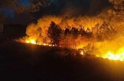 Lửa bùng phát dữ dội tại rừng thông huyện Diễn Châu, tỉnh Nghệ An