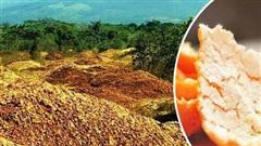 Công ty nước ép đổ 12 nghìn tấn vỏ cam xuống khu đất trống đến nỗi bị kiện, 16 năm sau điều kỳ diệu khiến thế giới kinh ngạc xảy ra