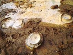 Phát hiện hóa thạch khoảng 200 triệu năm tuổi tại Gia Lai