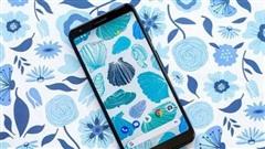 Google khai tử' một trong những chiếc smartphone Android tốt nhất năm ngoái