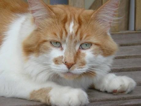 Rubble - con mèo già nhất thế giới, đã qua đời ở tuổi 31