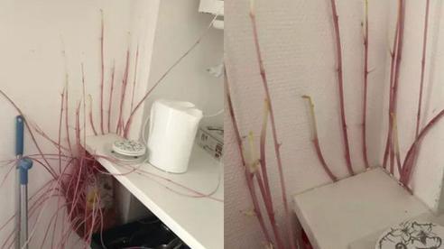 Vắng nhà 4 tháng, cô gái trẻ trở về liền phát hoảng với cảnh tượng 'sinh vật lạ' tấn công căn bếp, thì ra là do chính mình 'rước' về