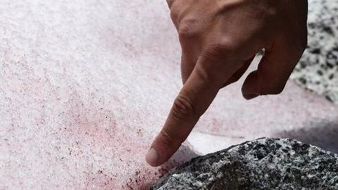 Tuyết trên dãy An-pơ đang chuyển sang màu hồng, nhưng đó mới chỉ là khởi đầu của thảm họa