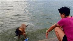 Hà Nội nắng nóng đỉnh điểm: Người và thú cưng đổ xuống hồ Tây tắm giải nhiệt