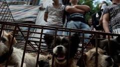 Điểm nóng du lịch của Campuchia chính thức cấm buôn bán thịt chó