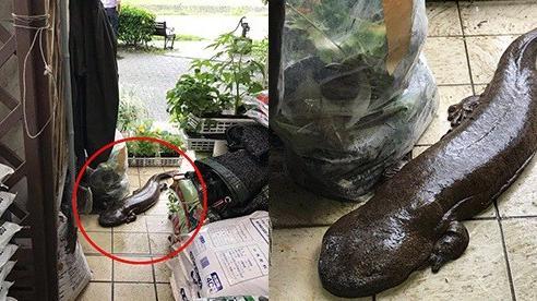 Đến tận cửa hỏi thăm nhà dân sau trận mưa lớn, chú cá kỳ lạ khiến dân mạng tranh cãi: 'Đây là cá trê đại bự phiên bản mọc chân?'