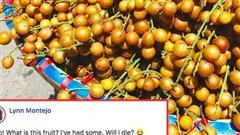 Lần đầu thấy quất hồng bì ở Việt Nam, cô bạn nước ngoài lo lắng hỏi 'Ăn vào có chết không?' khiến ai cũng phì cười