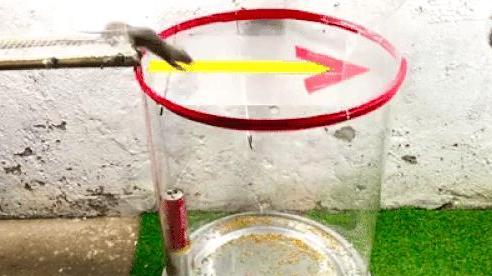 Bí quyết làm bẫy chuột từ vật liệu đơn giản đến không ngờ
