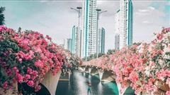 Cây cầu hoa giấy đẹp như tranh vẽ ở Ecopark