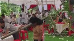 Clip: Đi đám cưới vui quá, người phụ nữ vác cả thân cây đu đủ vào hội trường để 'quẩy'