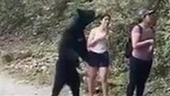 Gấu đen bị thiến sau khi vô tư 'đụng chạm' nữ du khách trẻ